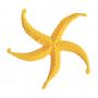 Matrice étoile de mer